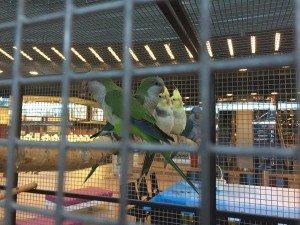 papugi galeria