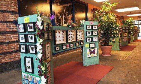 wystawa motyli 5
