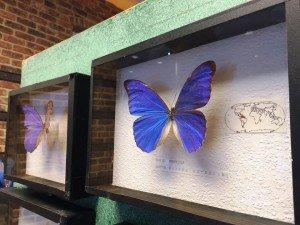 wystawa motyli1
