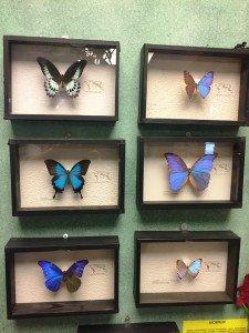 wystawa motyli